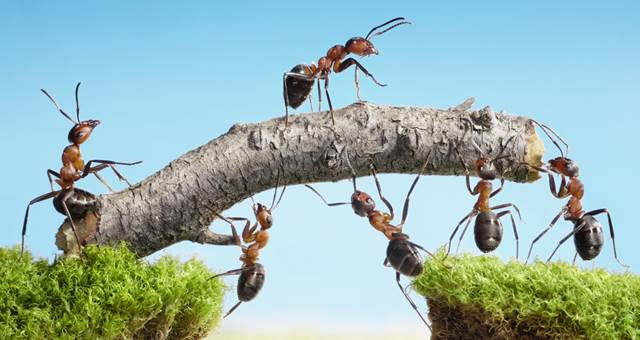 Maakt zelfsturing managers overbodig?